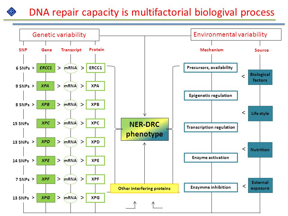 DNA repair capacity is multifactorial biologival process