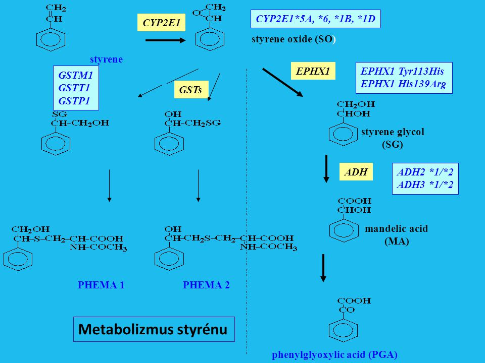 Metabolizmus styrénu CYP2E1*5A, *6, *1B, *1D CYP2E1 styrene oxide (SO)