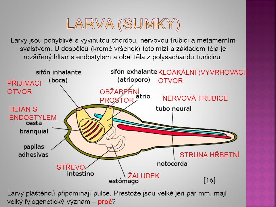 Larva (sumky)