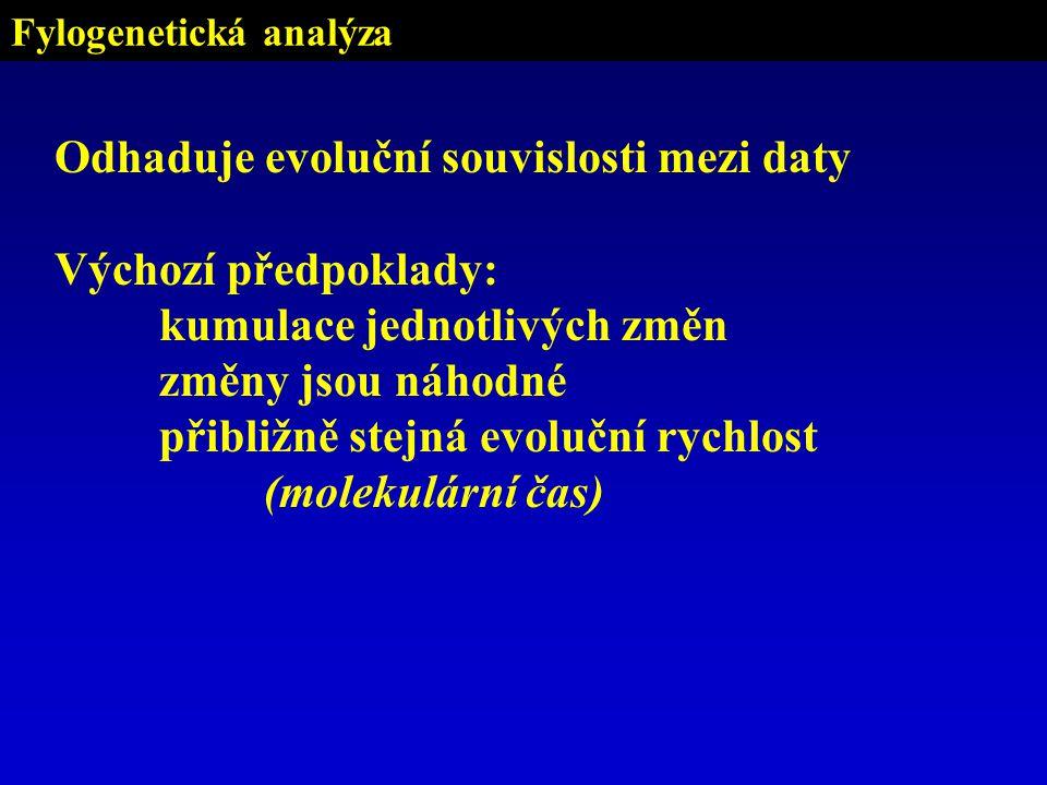 Fylogenetická analýza