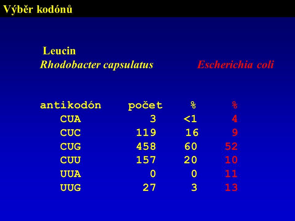 Výběr kodónů Leucin. Rhodobacter capsulatus. antikodón počet % CUA 3 <1. CUC 119 16.