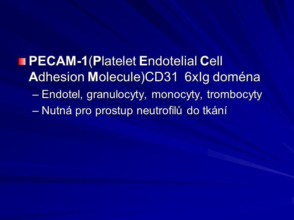 PECAM-1(Platelet Endotelial Cell Adhesion Molecule)CD31 6xIg doména