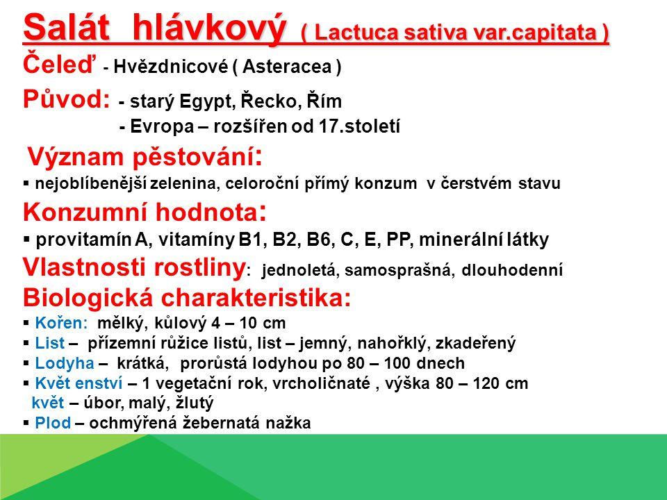 Salát hlávkový ( Lactuca sativa var.capitata )