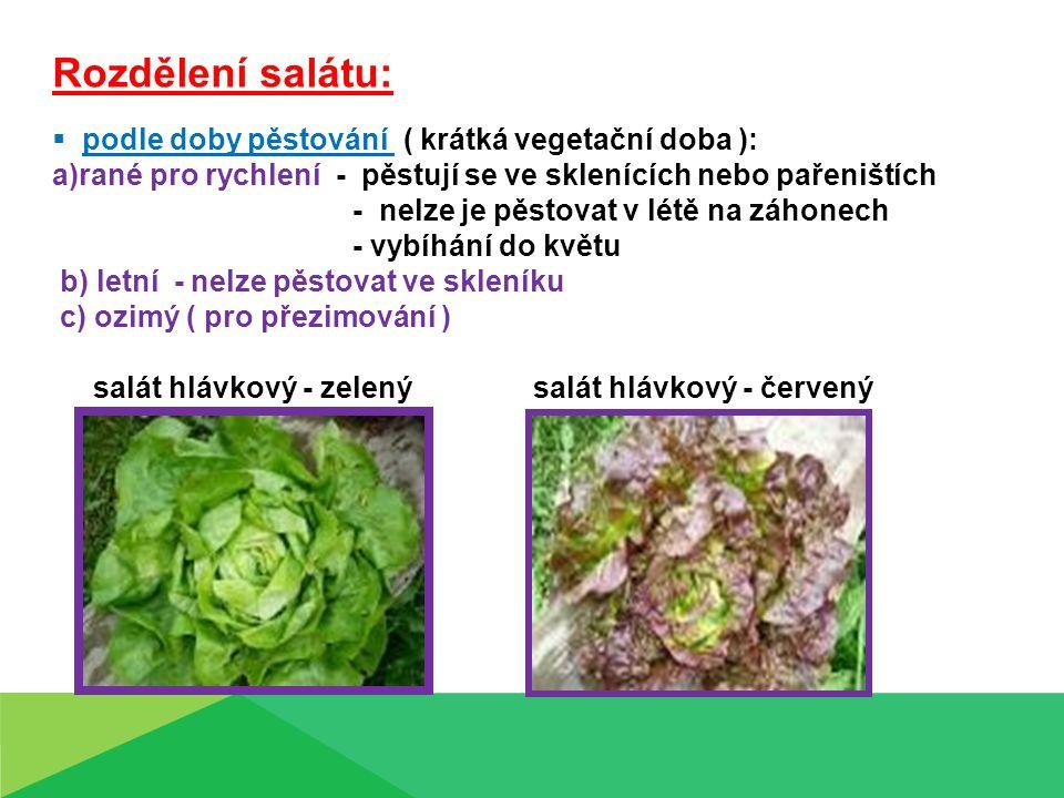 Rozdělení salátu: podle doby pěstování ( krátká vegetační doba ):