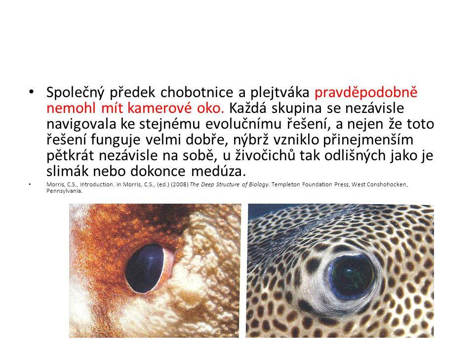 Společný předek chobotnice a plejtváka pravděpodobně nemohl mít kamerové oko. Každá skupina se nezávisle navigovala ke stejnému evolučnímu řešení, a nejen že toto řešení funguje velmi dobře, nýbrž vzniklo přinejmenším pětkrát nezávisle na sobě, u živočichů tak odlišných jako je slimák nebo dokonce medúza.