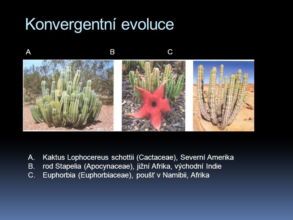 Konvergentní evoluce A B C