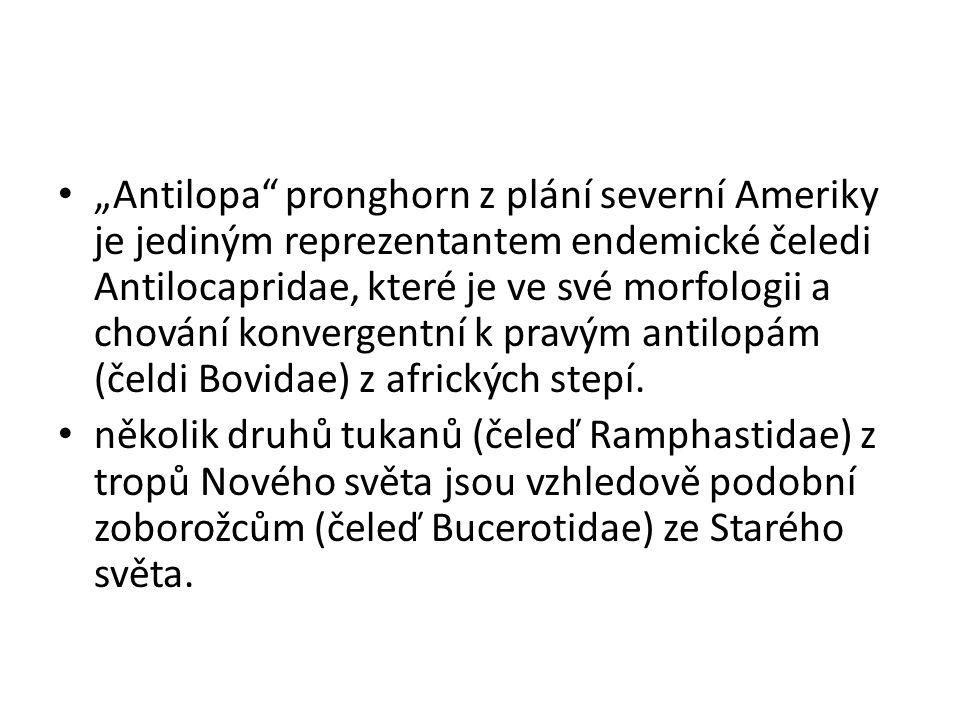 """""""Antilopa pronghorn z plání severní Ameriky je jediným reprezentantem endemické čeledi Antilocapridae, které je ve své morfologii a chování konvergentní k pravým antilopám (čeldi Bovidae) z afrických stepí."""