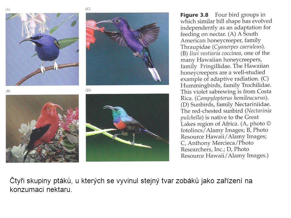 Čtyři skupiny ptáků, u kterých se vyvinul stejný tvar zobáků jako zařízení na konzumaci nektaru.