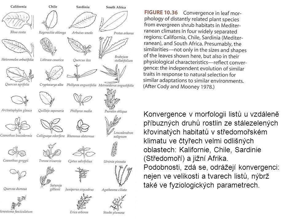 Konvergence v morfologii listů u vzdáleně příbuzných druhů rostlin ze stálezelených křovinatých habitatů v středomořském klimatu ve čtyřech velmi odlišných oblastech: Kalifornie, Chile, Sardinie (Středomoří) a jižní Afrika.