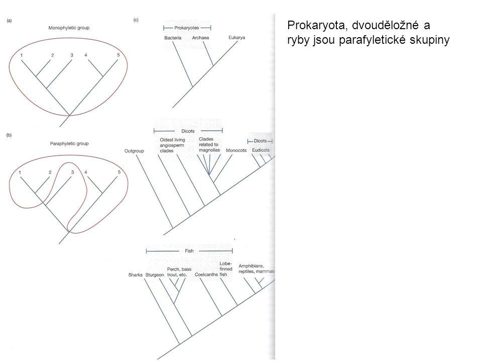 Prokaryota, dvouděložné a ryby jsou parafyletické skupiny
