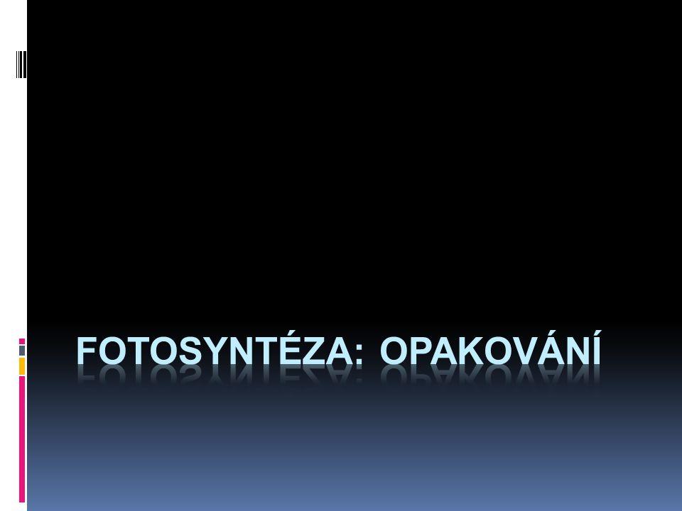 fotosyntéza: opakování
