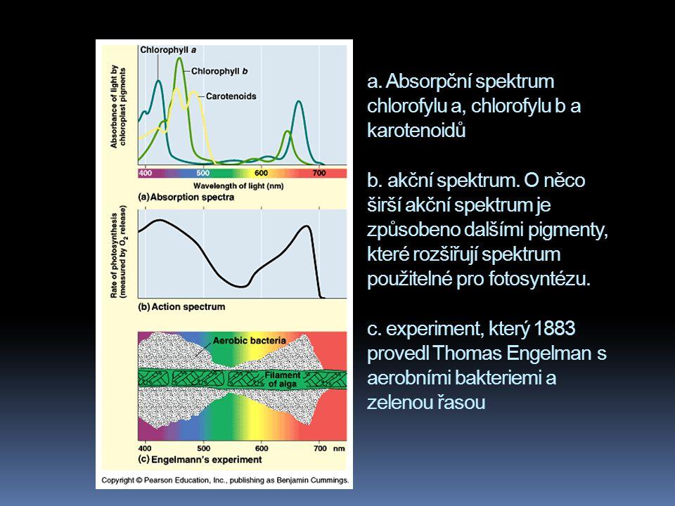 a. Absorpční spektrum chlorofylu a, chlorofylu b a karotenoidů b