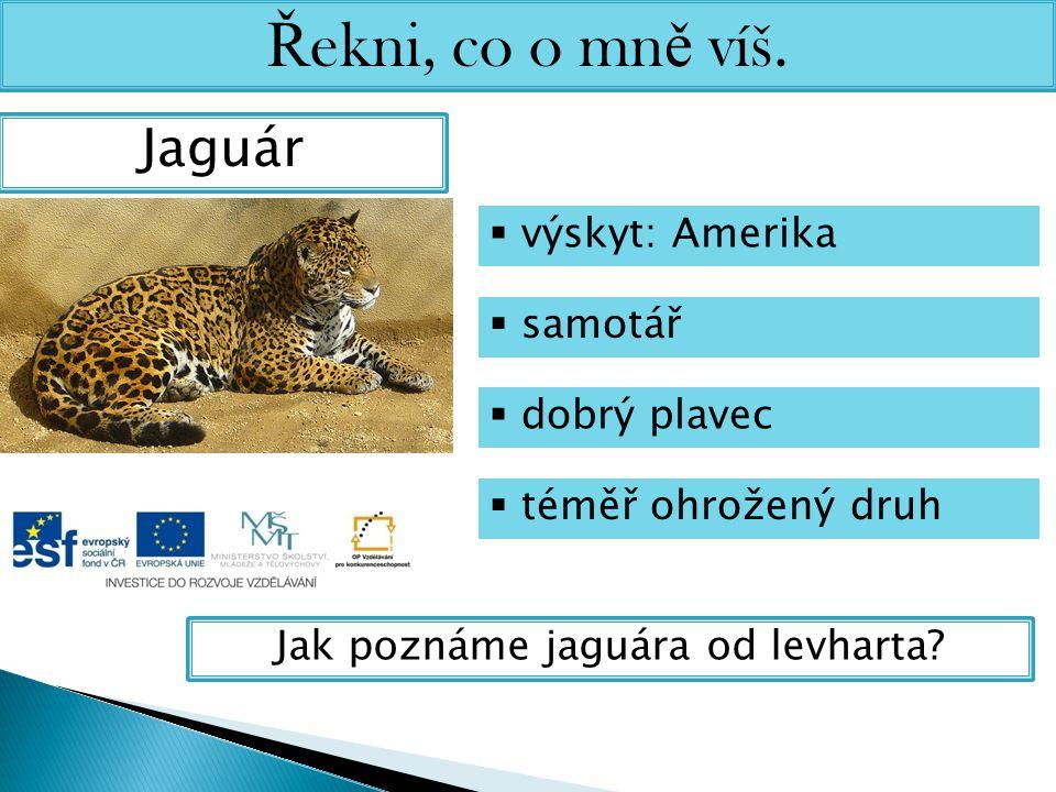 Jak poznáme jaguára od levharta