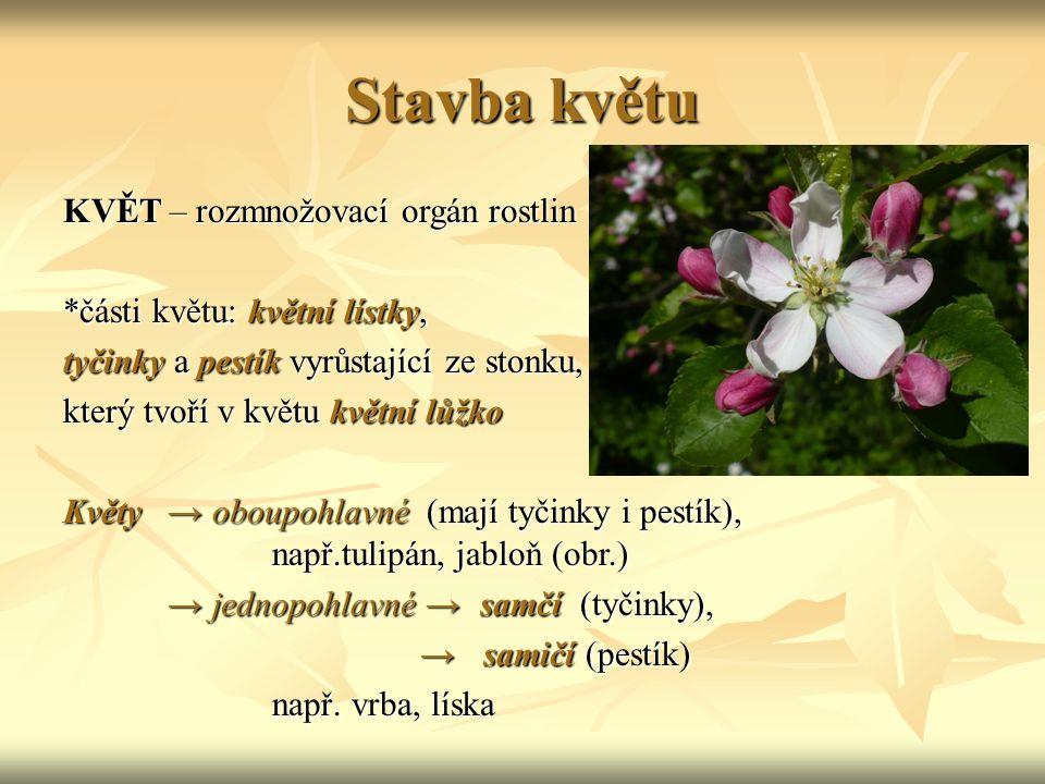 Stavba květu KVĚT – rozmnožovací orgán rostlin