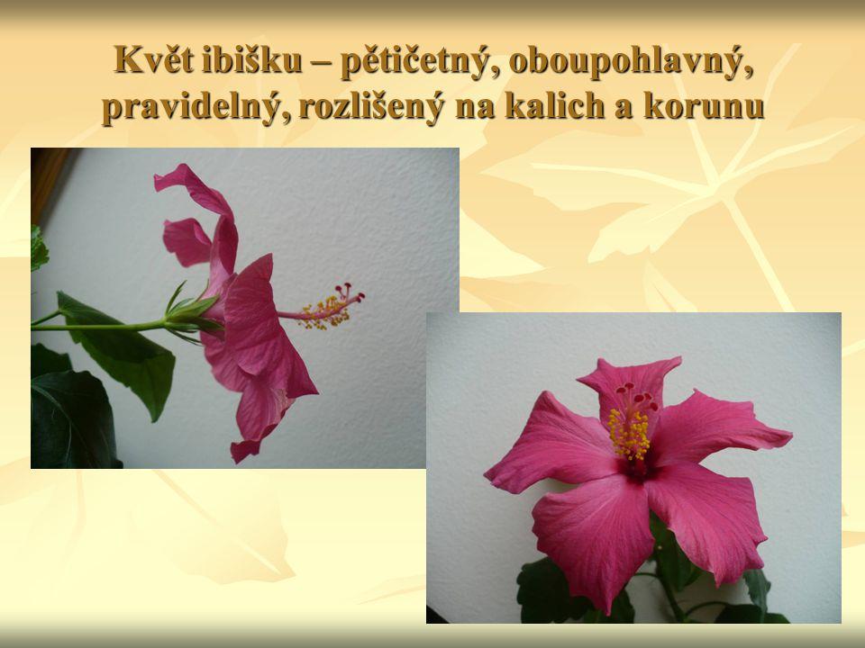 Květ ibišku – pětičetný, oboupohlavný, pravidelný, rozlišený na kalich a korunu