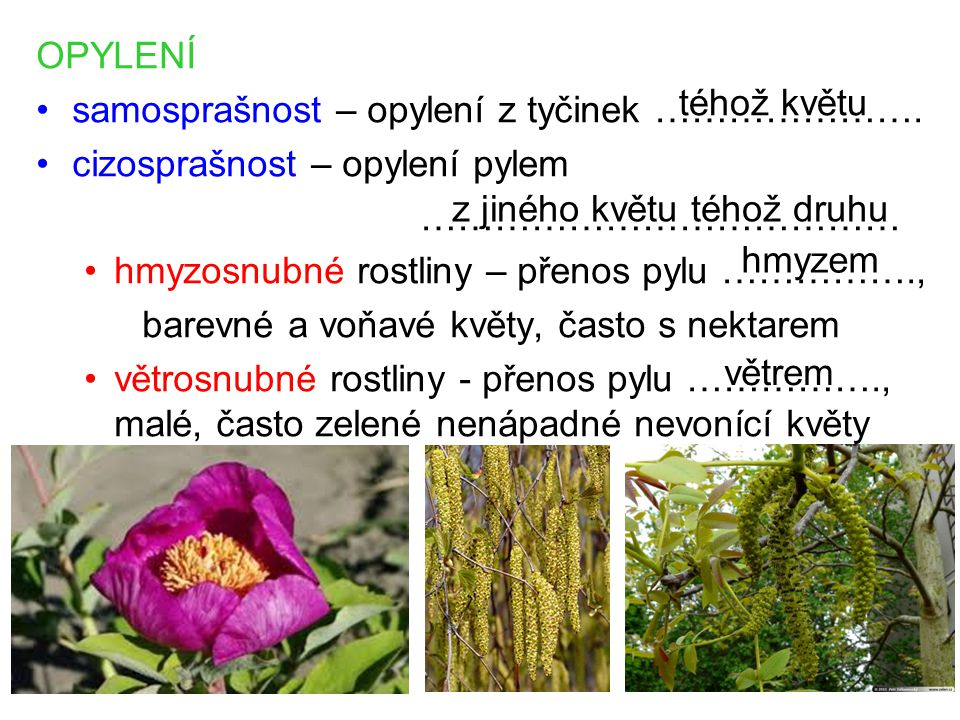 OPYLENÍ samosprašnost – opylení z tyčinek …………………. cizosprašnost – opylení pylem. ………………………………… hmyzosnubné rostliny – přenos pylu …………….,