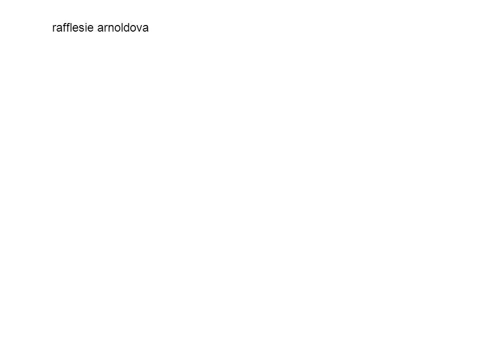 rafflesie arnoldova
