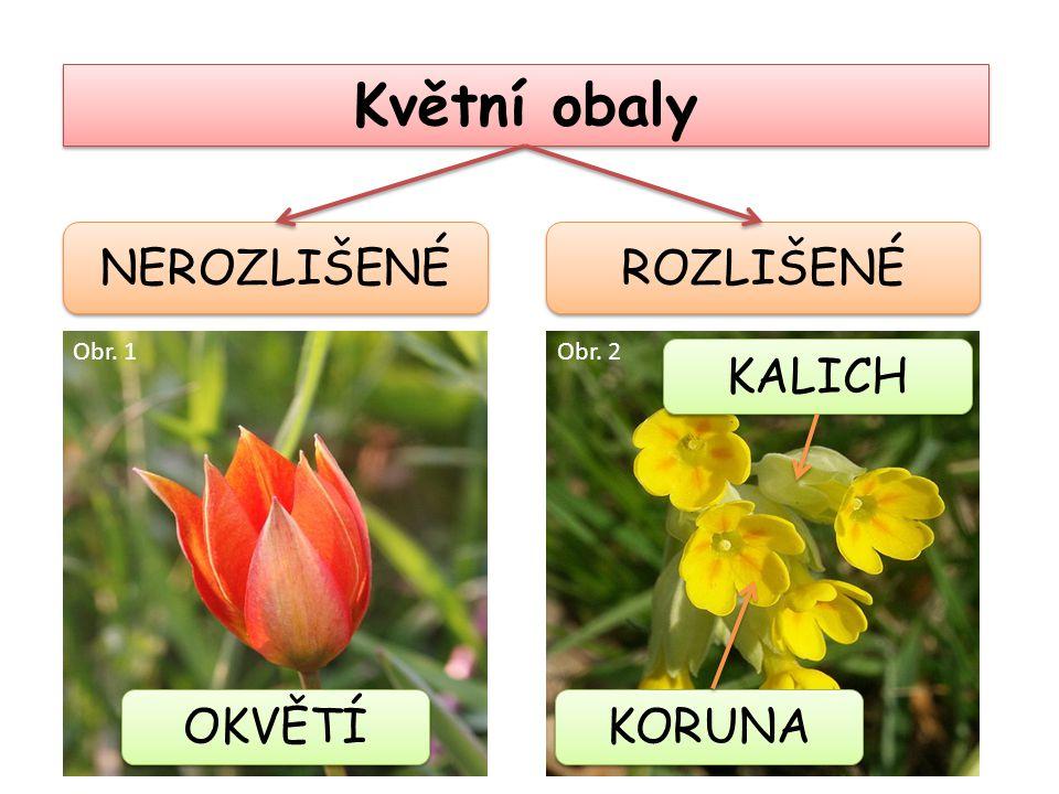 Květní obaly NEROZLIŠENÉ ROZLIŠENÉ Obr. 1 Obr. 2 KALICH OKVĚTÍ KORUNA