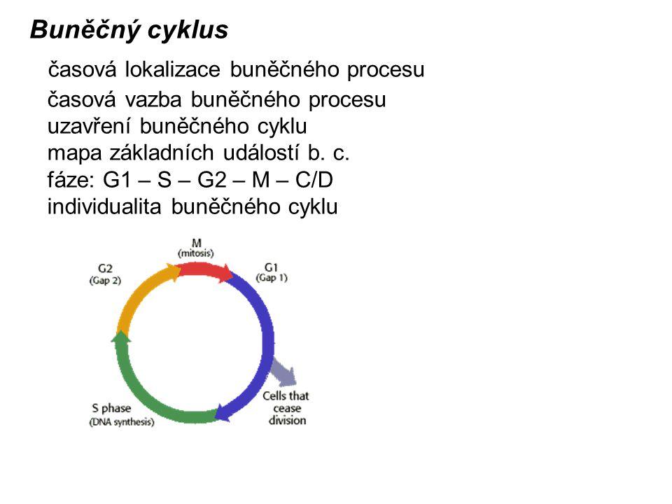 časová lokalizace buněčného procesu