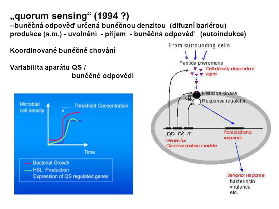 """""""quorum sensing (1994 ) --buněčná odpověď určená buněčnou denzitou (difuzní bariérou)"""
