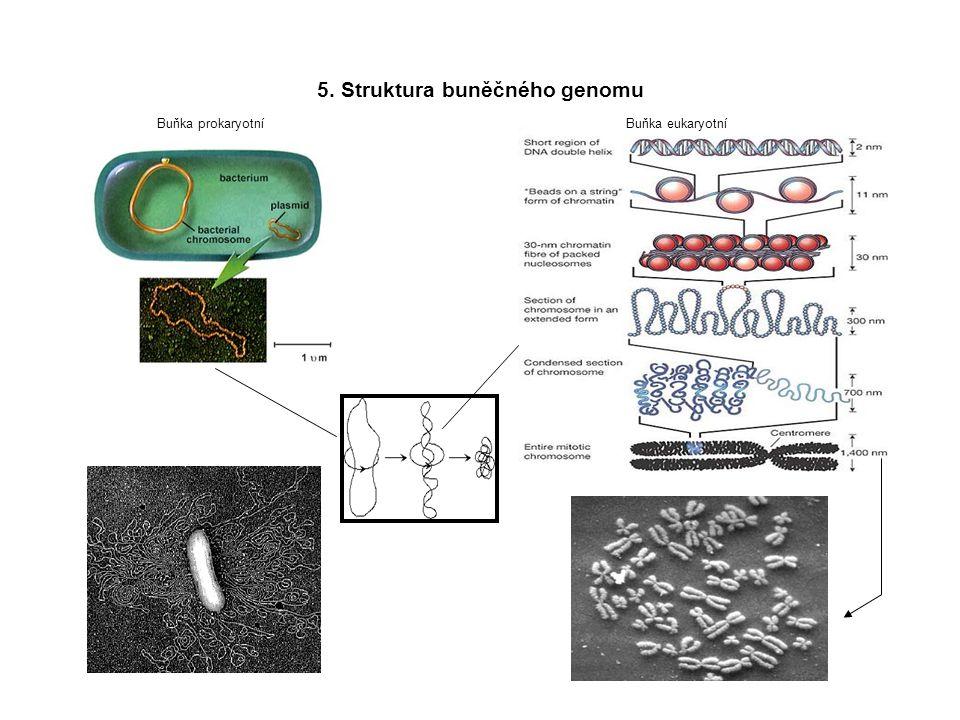 5. Struktura buněčného genomu