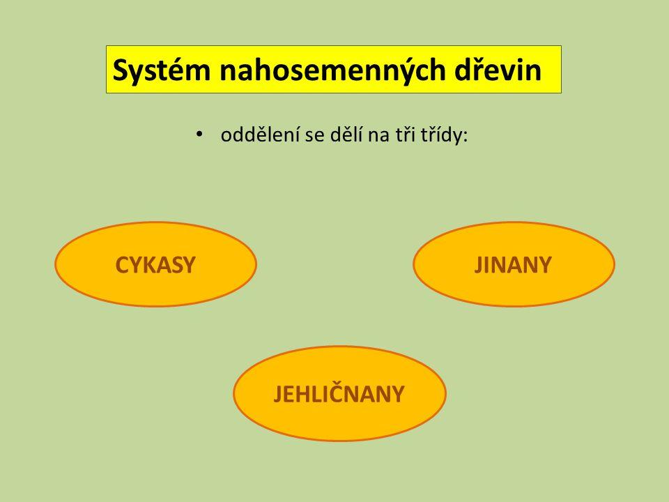 Systém nahosemenných dřevin