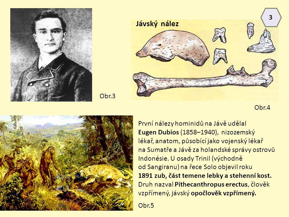 Jávský nález 3 Obr.3 Obr.4 První nálezy hominidů na Jávě udělal