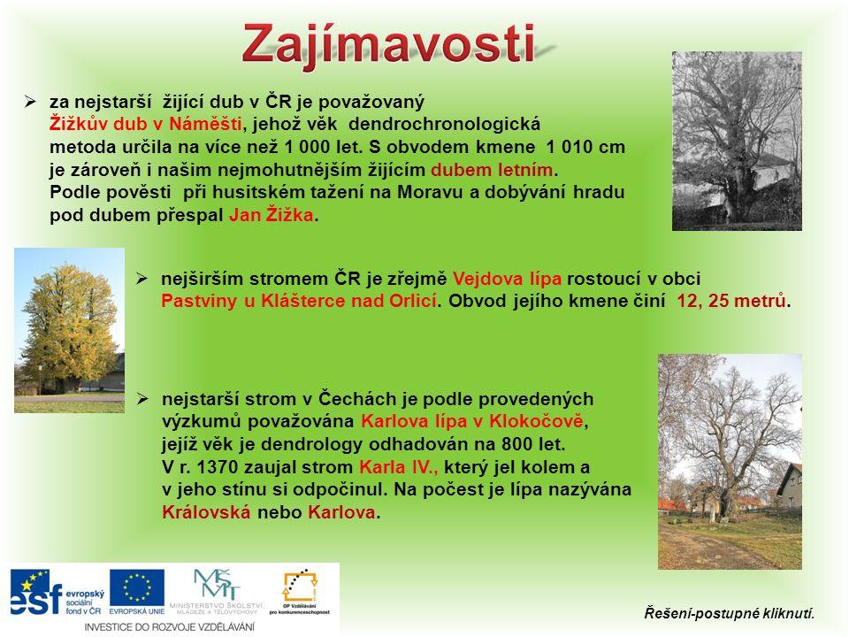 Zajímavosti za nejstarší žijící dub v ČR je považovaný