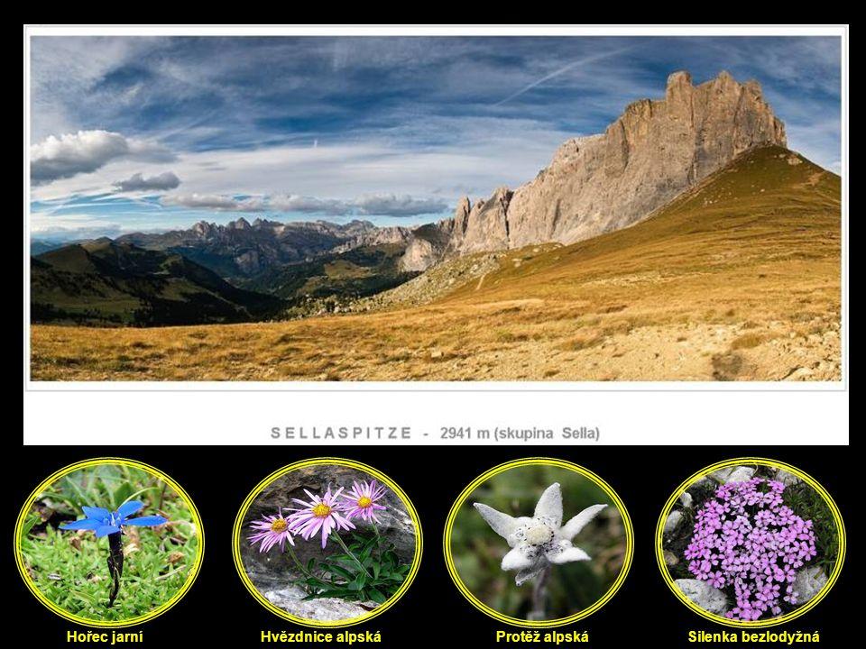 Hořec jarní Hvězdnice alpská Protěž alpská Silenka bezlodyžná