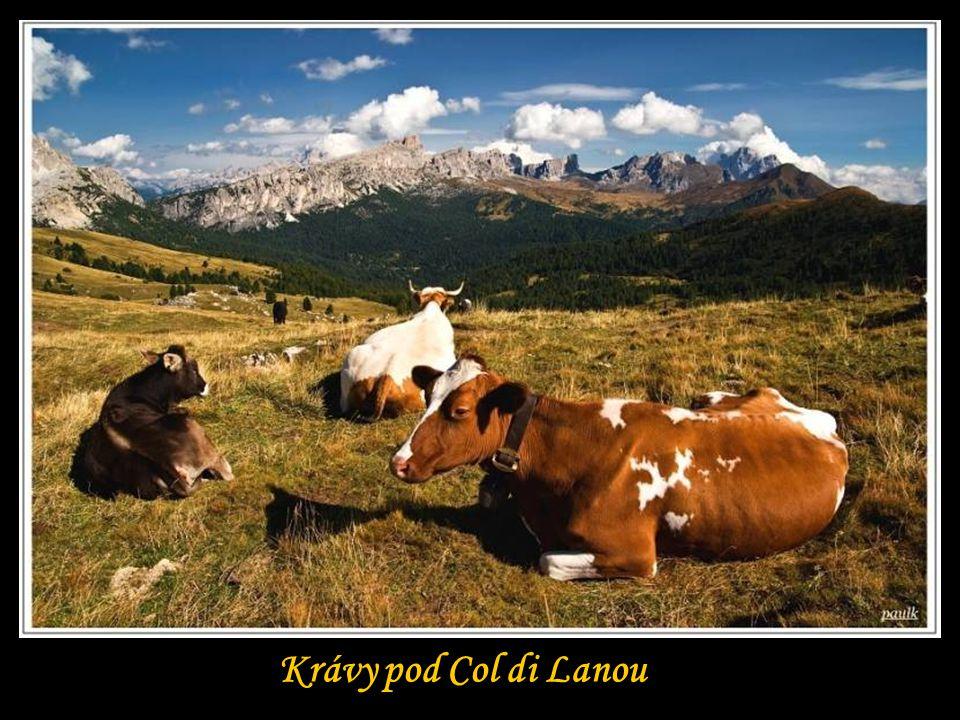Krávy pod Col di Lanou