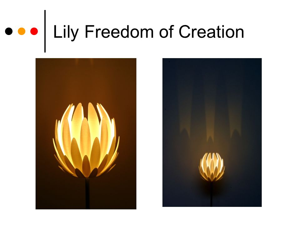 Lily Freedom of Creation