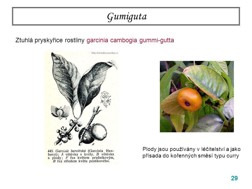 Gumiguta Ztuhlá pryskyřice rostliny garcinia cambogia gummi-gutta