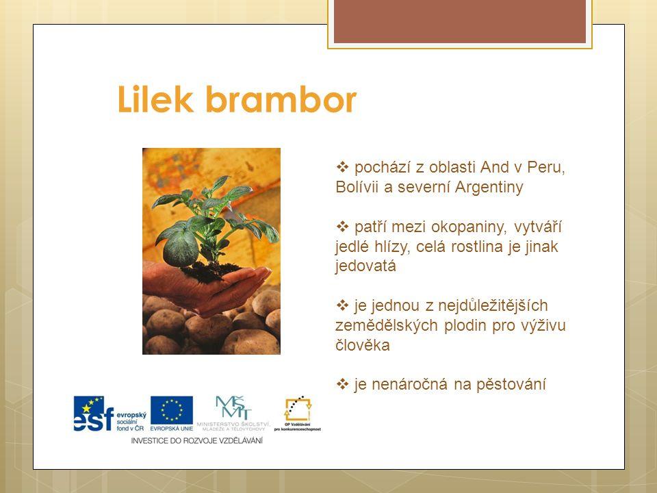 Lilek brambor pochází z oblasti And v Peru, Bolívii a severní Argentiny. patří mezi okopaniny, vytváří jedlé hlízy, celá rostlina je jinak jedovatá.