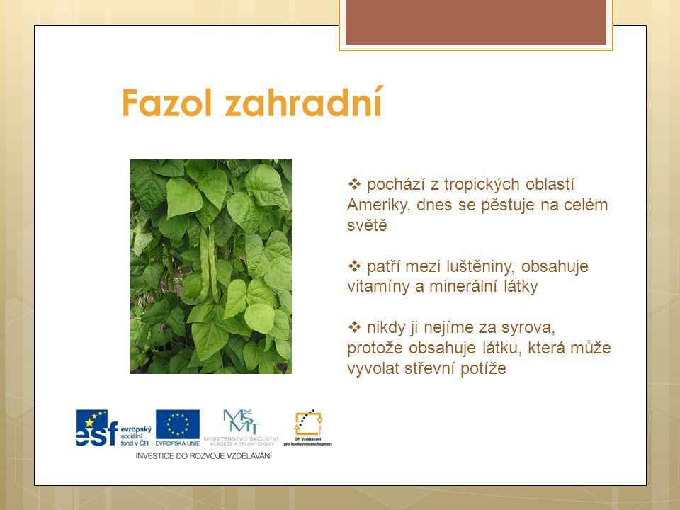 Fazol zahradní pochází z tropických oblastí Ameriky, dnes se pěstuje na celém světě. patří mezi luštěniny, obsahuje vitamíny a minerální látky.