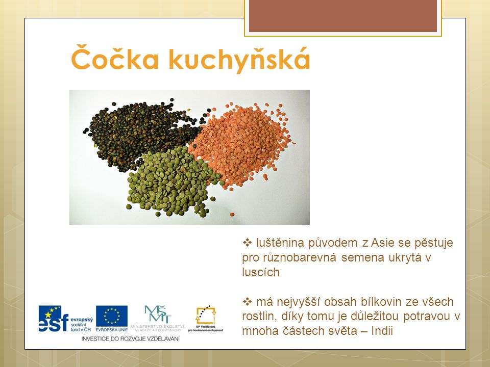 Čočka kuchyňská luštěnina původem z Asie se pěstuje pro různobarevná semena ukrytá v luscích.