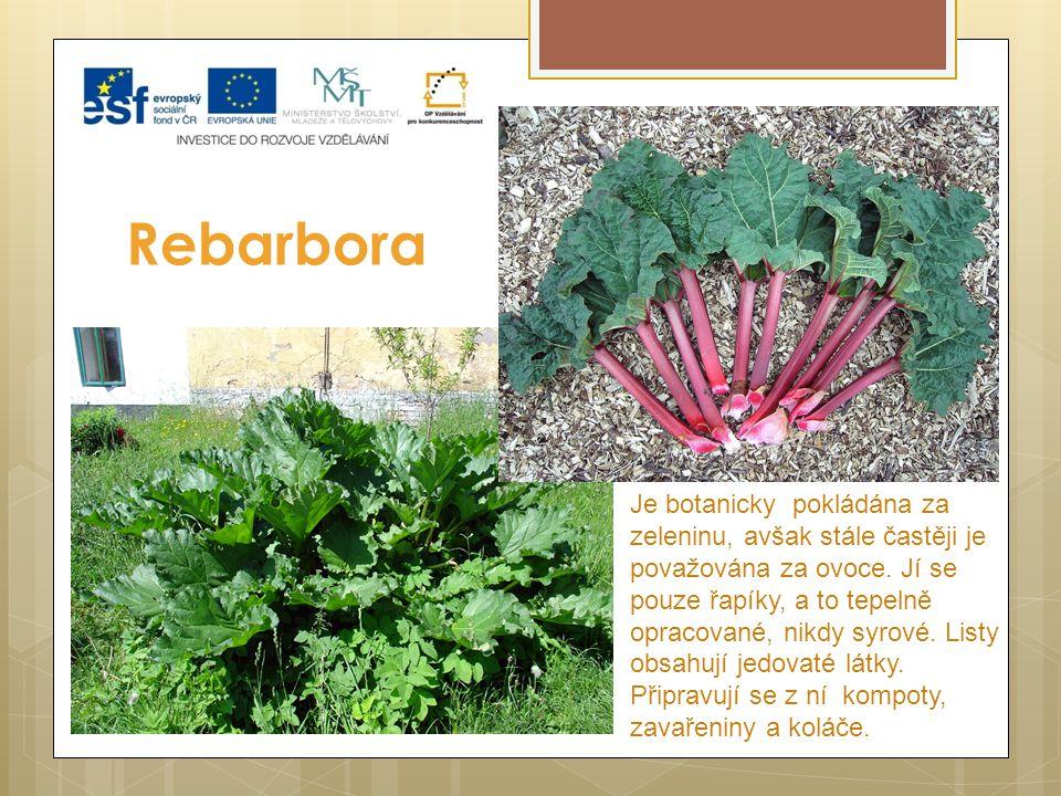 Rebarbora