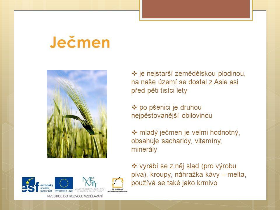 Ječmen je nejstarší zemědělskou plodinou, na naše území se dostal z Asie asi před pěti tisíci lety.