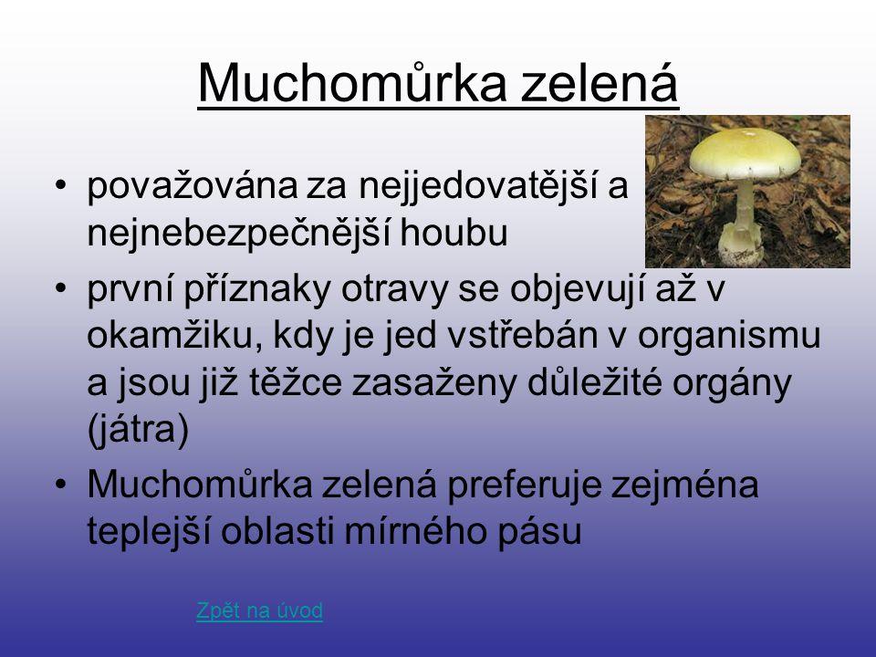 Muchomůrka zelená považována za nejjedovatější a nejnebezpečnější houbu.