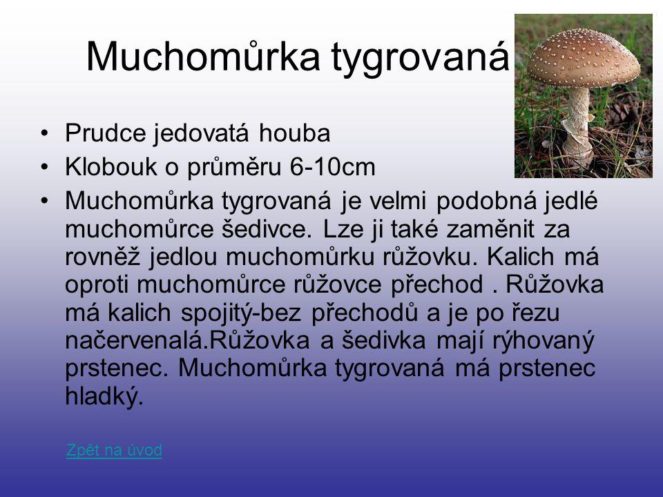 Muchomůrka tygrovaná Prudce jedovatá houba Klobouk o průměru 6-10cm