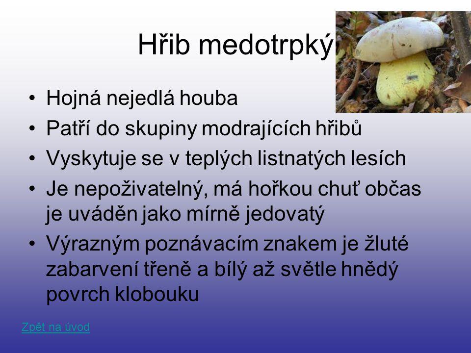 Hřib medotrpký Hojná nejedlá houba Patří do skupiny modrajících hřibů