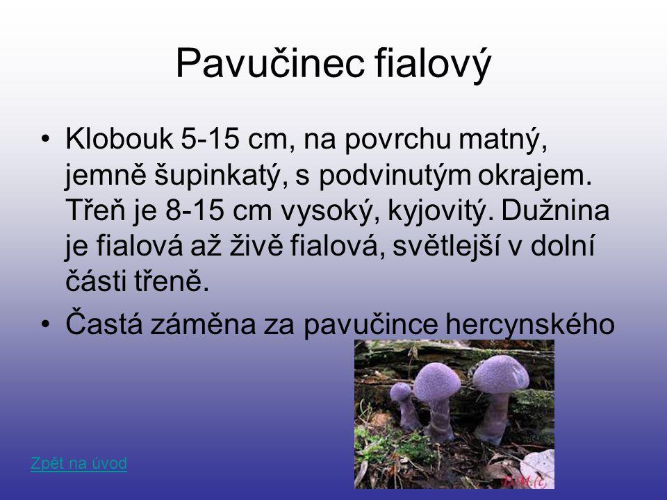 Pavučinec fialový