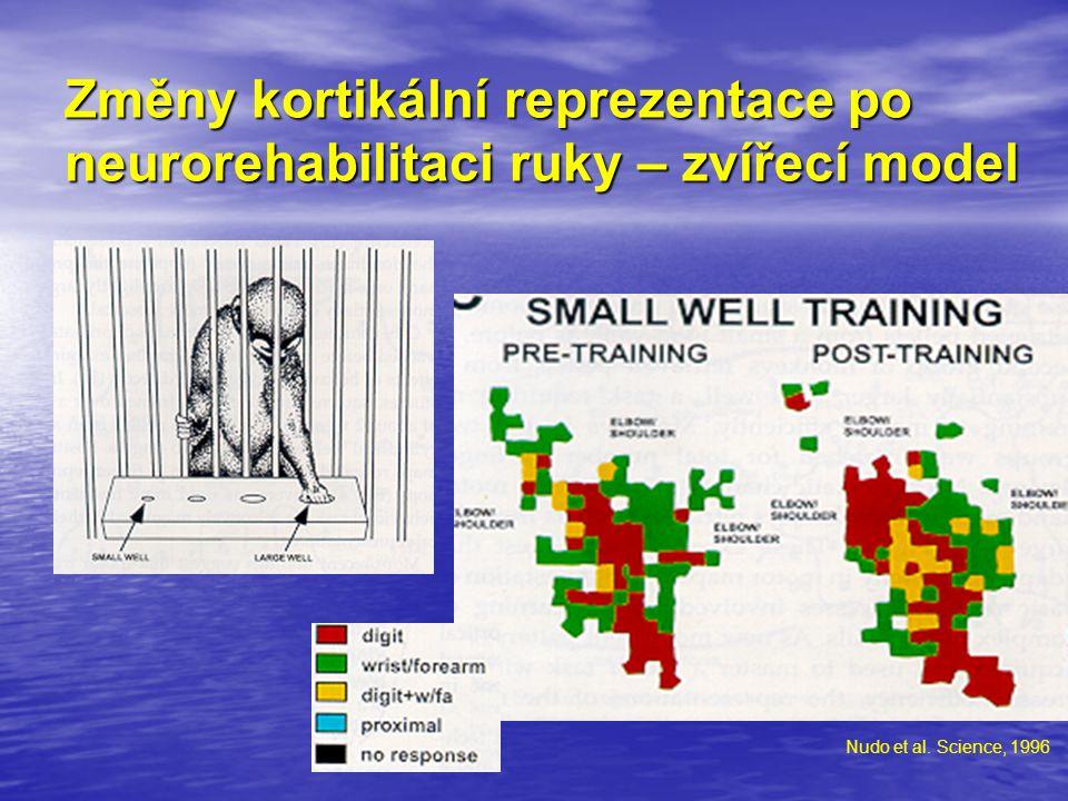 Změny kortikální reprezentace po neurorehabilitaci ruky – zvířecí model