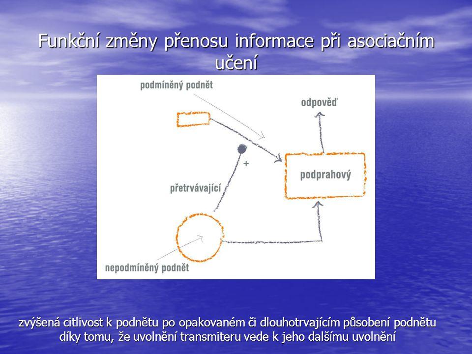 Funkční změny přenosu informace při asociačním učení