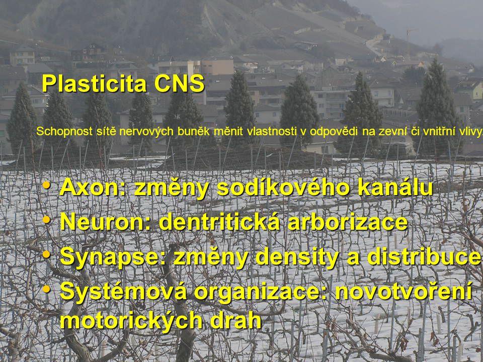 Axon: změny sodíkového kanálu Neuron: dentritická arborizace