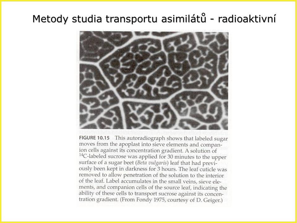 Metody studia transportu asimilátů - radioaktivní
