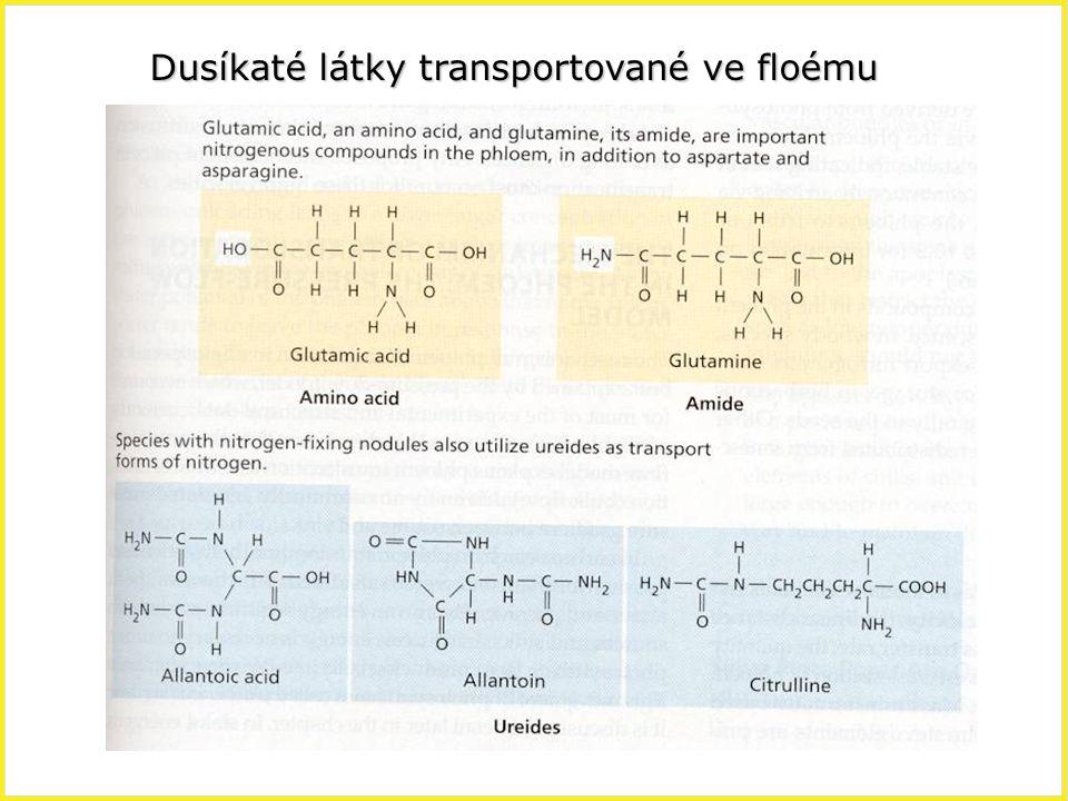 Dusíkaté látky transportované ve floému