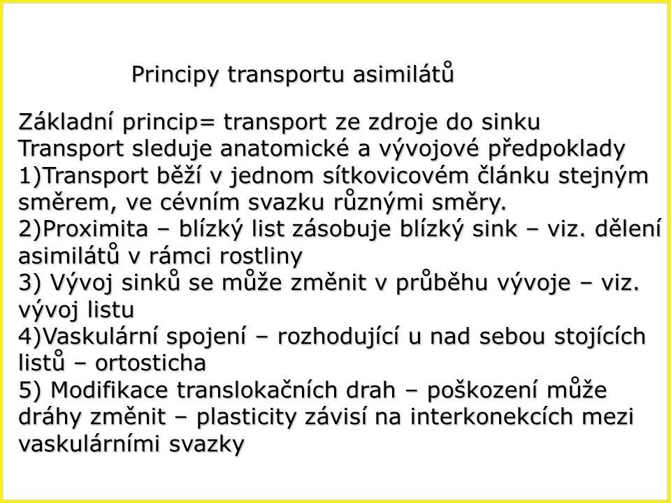 Principy transportu asimilátů