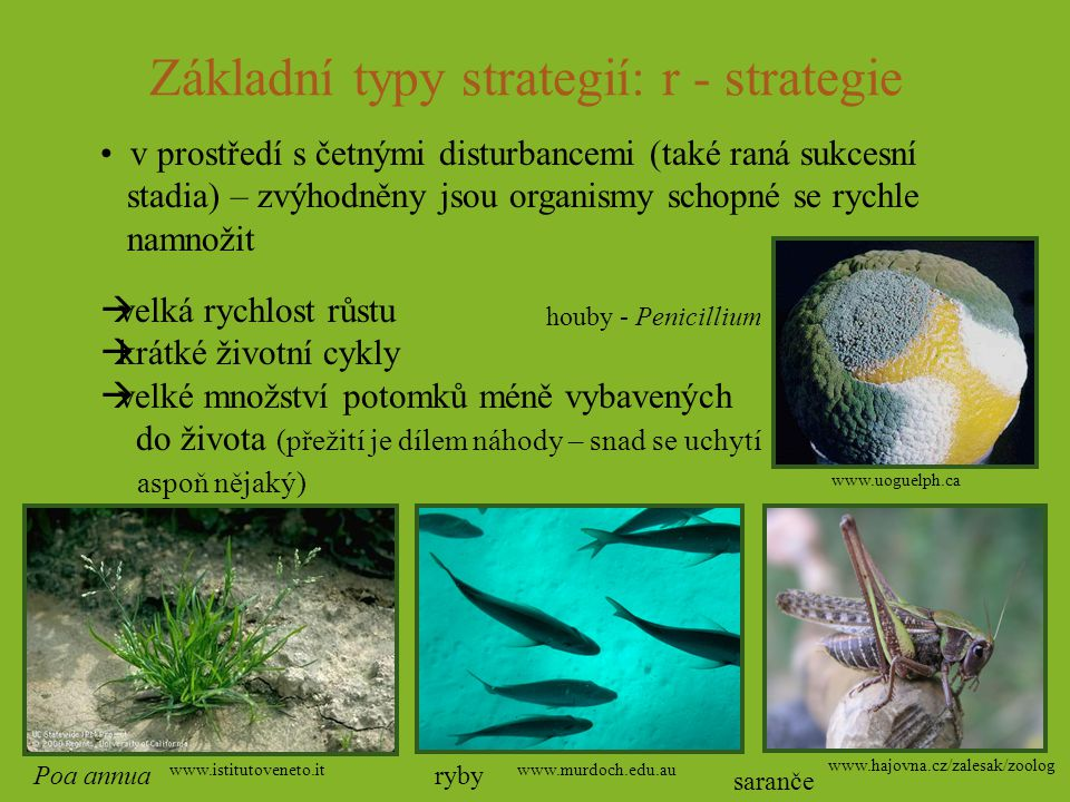 Základní typy strategií: r - strategie