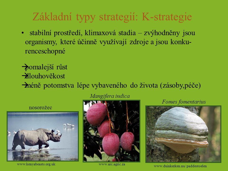 Základní typy strategií: K-strategie