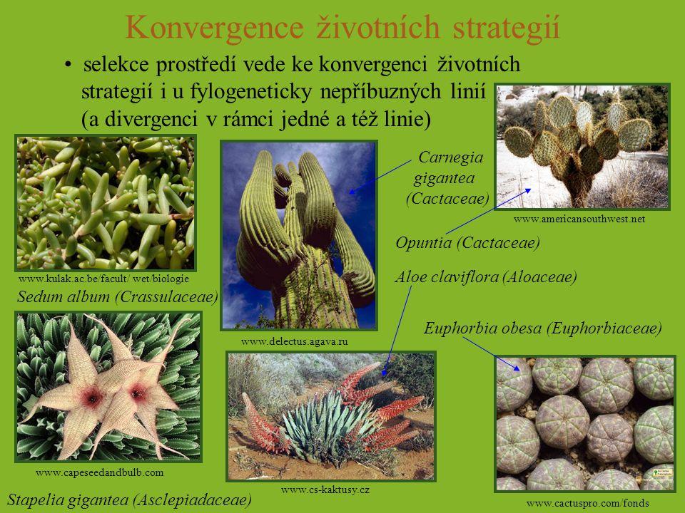 Konvergence životních strategií
